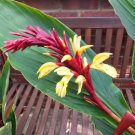 Cautleya Spicata 10 Seeds, Hardy Himalayan Ginger, Chinese Butterfly