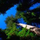 Philosophy - Philosophy Of Mathematics & Philosophy Of Nature