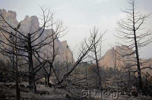 Environmental Management - Deforestation & Species Decimation