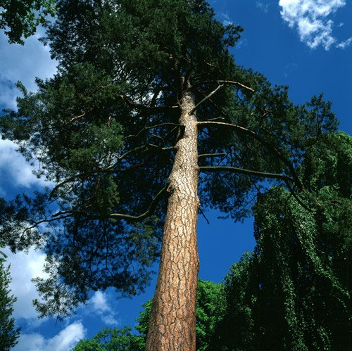 Environmental Issues - Taking Sides - Philosophy & Politics I