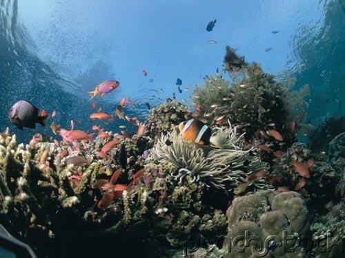 The Ocean - Ocean Life - Complex Communities