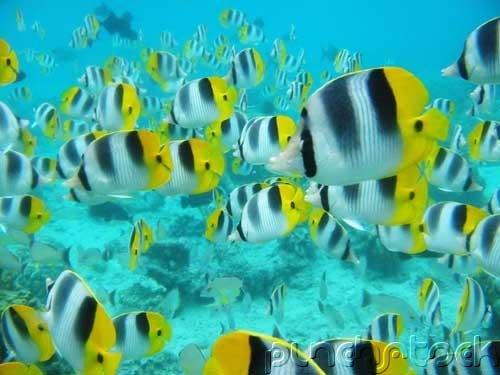 The Ocean - Ocean Life - Marine Lifestyles