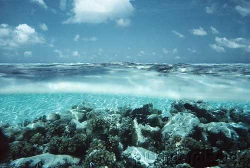 The Ocean - Ocean Life - The Web Of Life