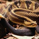 Snakes - Evaluation Of Mystery In Nature - Lifestyles - Part I