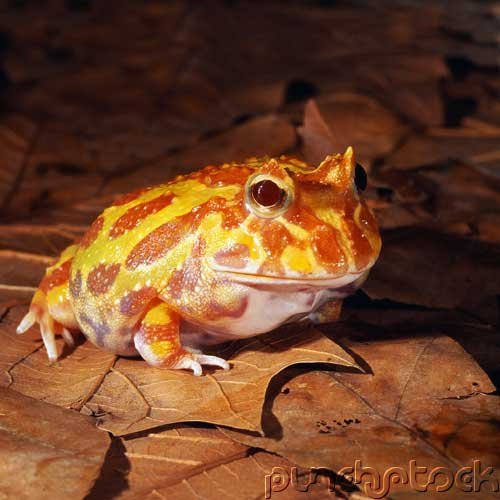 Amphibians Of North America