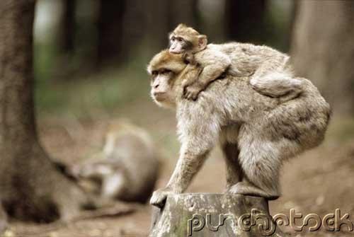 Mammals -  The Primates - Part VI