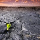 The Prehistoric Past - Life's Beginnings - 545-4000 Mil Yrs Ago