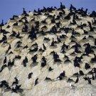 Bird Behavior - Social Life