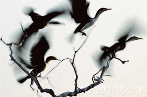 Bird Behavior - The Living Bird