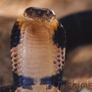 Snakes - Evaluation Of Mystery In Nature - Synthesis - Part III
