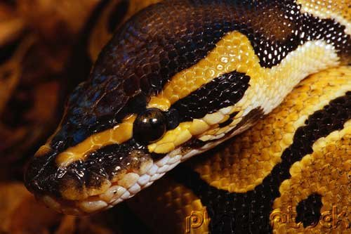 Snakes - Evaluation Of Mystery In Nature - Diversity - Part II