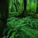Jungles - An Exploration Of The Most Mysterious Of All Natural Worlds - Introduction