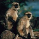 Primates Of The World - Primate Intelligence - Part IV