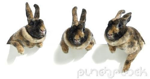 Rabbits & Rodents