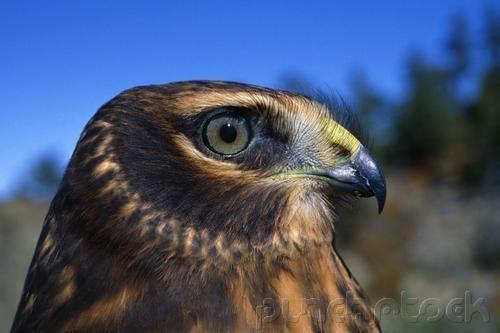 Raptors - Eagles - Hawks - Falcons & Vultures - Part IV
