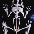 Prehistoric Life - Fossil Amphibians