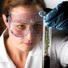 Growth Regulation & Growth Responses - Regulating Growth & Development - The Plant Hormones