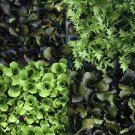Genetics & Evolution - The Evolution Of Plant Diversity