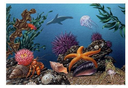 Ocean Life - Fragile Environments