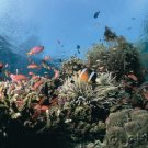 Ocean Life - Complex Communities