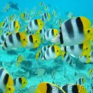 Ocean Life - Marine Lifestyles