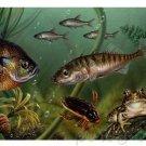 Ocean Life - Evolution & Extinction