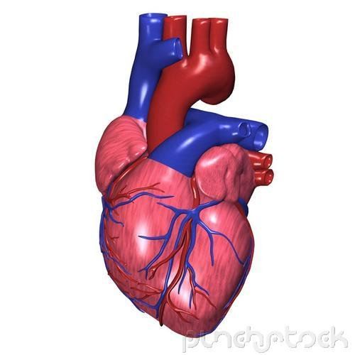 Assessment & Management Of Clinical Problems - Coronary Artery Disease