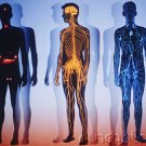 Assessment & Management Of Clinical Problems - The Musculoskeletal System