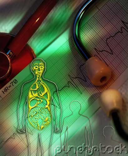 Reproductive Anatomy & Physiology II