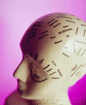 Memory & Cognition - Language Comprehension & Memory