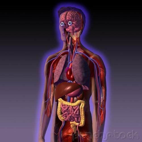 Nursing Assistants - Body Structure & Function