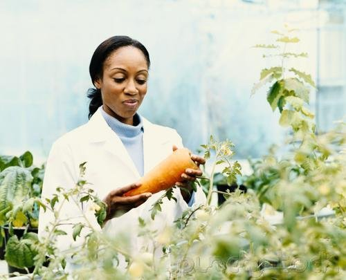 The Contribution Of African American  Women To America - Sciences
