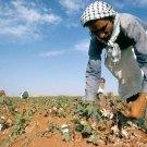 How Plants Survive - Regulators Of Plant Growth & Development