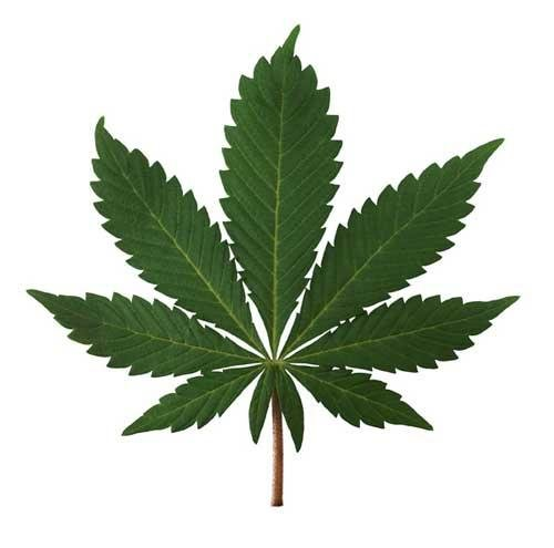 A Review Of The Literature - Chronic Effects Of Cannabis On Cognitive Functioning