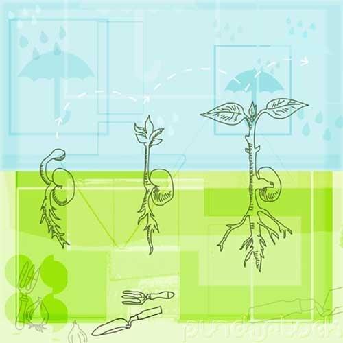 External Factors & Plant Growth