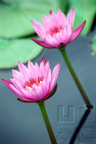 Diversity - Evolution Of The Flowering Plants