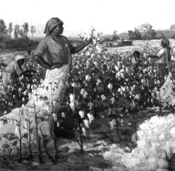 United States History - Taking Different Economic Paths - Cotton Is King In The South 1789 - 1860