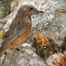 Bird Behavior - Rearing the Young
