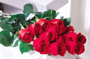 One Dozen Roses in Box