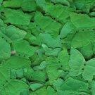 Emerald Green Silk Butterfly Petals ~ Wedding ~ Shower ~ Party ~ Favors