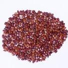 RK seeds- Subabul seed (Leucaena leucocephala seeds) -Pack of 100 g