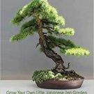 BONSAI - Grow Your Own Little Japanese Zen Garden Hardcover Paperback