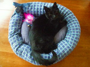 Custom Cat Bed with Toys and Catnip