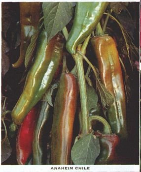 ANAHEIM - NEW MEXICAN MILDLY HOT PEPPER SEEDS