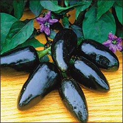 Black Hungarian hot pepper seeds