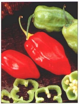 CARIBBEAN RED HABANERO HOT PEPPER SEEDS