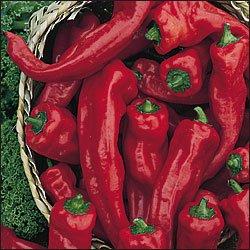 Georgia Flame hot pepper seeds