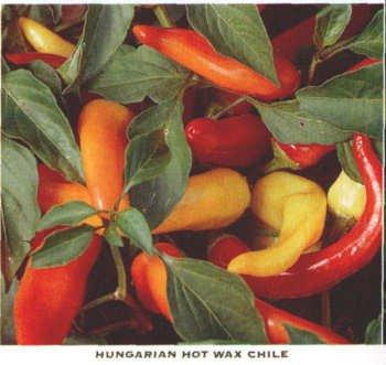 HUNGARIAN WAX, HOT BANANA PEPPER SEEDS