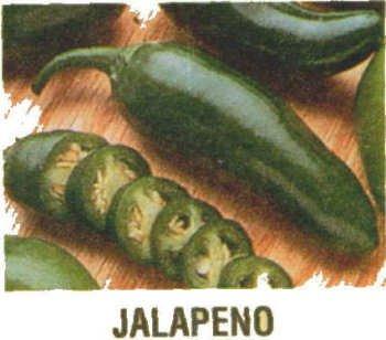 JALAPENO HOT PEPPER SEEDS