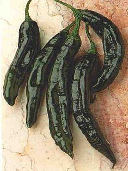 Pasillo Bajio slightly hot pepper seeds